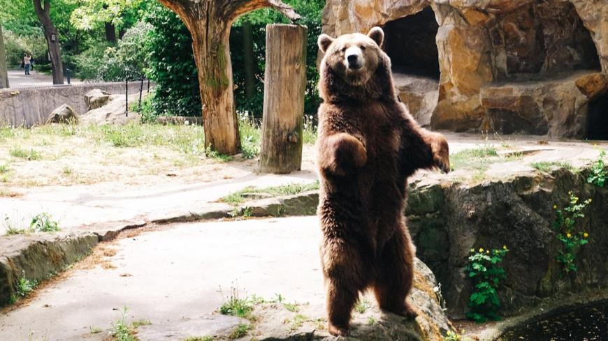 Медведь и марихуана ролик курить коноплю во время беременности