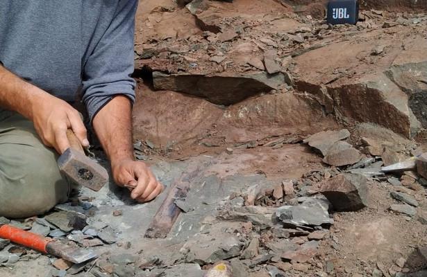Крупнейший вистории мегараптор найден вАргентине
